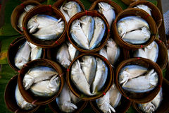 Fresh tuna Stock Images