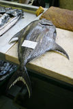 Fresh Tuna. A large frsh Tuna on a fishmonger's slab royalty free stock images