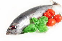 Fresh tuna Royalty Free Stock Photography