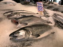 Albacore tuna at Pike`s Place Market. Fresh tuna fish on display at an outdoor fish market stock photo