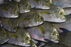 Fresh Tuna fish at market. Environmental problem - overfishing is ruining our oceans stock image