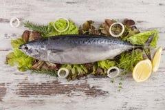 Fresh tuna fish on salad. Stock Image