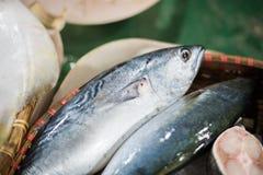Fresh Tuna Fish Stock Images