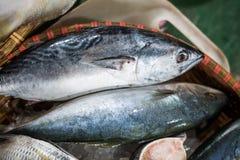 Fresh Tuna Fish Royalty Free Stock Image
