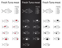 Fresh Tuna meat cuts set. Set of meat cut parts icons for packaging and info-graphic Stock Photos