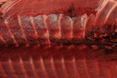 Fresh tuna meat Royalty Free Stock Photography