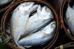 Fresh tuna package Stock Photos