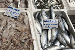 Fresh Tuna and Squid in polystyrene box fish Royalty Free Stock Images