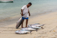 Fresh Tuna Royalty Free Stock Photo