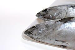 Fresh tunas. On a white tray Stock Photography