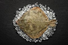 Fresh turbot fish on ice on a black stone table. Top view Royalty Free Stock Images