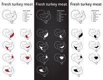 Fresh turkey meat cauts set Stock Photos