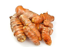 Fresh Turmeric or Curcuma Rhizome Stock Image