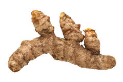 Fresh Turmeric Root Isolated Stock Photo