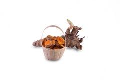 Fresh turmeric root. Stock Images