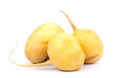 Fresh turnip. Stock Image