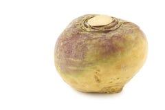 Fresh turnip(Brassica rapa rapa). On a white background Royalty Free Stock Photography