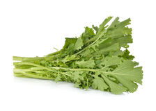 Fresh turnip greens on white Royalty Free Stock Images