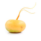 Fresh turnip Stock Images