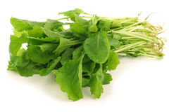 Fresh turnip tops (turnip greens). On a white background stock photos