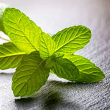 Fresh twig of green melissa officinalis or mint on slate background, close up royalty free stock photos