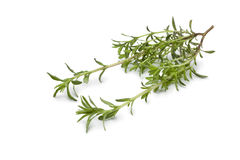 Fresh twig of Winter savory Royalty Free Stock Photo