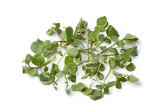 Fresh twigs of watercress Royalty Free Stock Photos