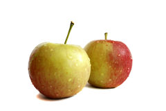 Fresh two apples with water droplets. Royalty Free Stock Photo