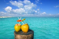 Fresh two coconuts juice water straws in caribbean. Fresh two coconuts juice cocktail water straws in caribbean sea trunk Royalty Free Stock Photos