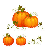 Fresh two pumpkin with sweet green leafs Stock Photo