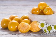 Fresh uchuva fruits. The plant known as uchuva, uvilla, aguaymanto or ushun is a herbaceous plant belonging to the family solanaceae Physalis peruviana royalty free stock photo