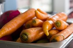 Fresh unclean whole carrot close-up. Selective focus. Fresh unclean whole carrots close-up. Selective focus Stock Image