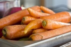 Fresh unclean whole carrot close-up. Selective focus. Fresh unclean whole carrots close-up. Selective focus Royalty Free Stock Photos