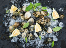 Fresh uncooked clams with lemon, herbs and spices on chipped ice over dark slate stone backdrop. Top view Royalty Free Stock Photography