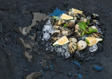 Fresh uncooked clams with lemon, herbs and spices on chipped ice over dark slate stone backdrop. Top view, copy space Stock Images