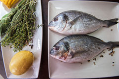 Fresh uncooked dorado. With lemon, herbs, oil and spices ready for preparing Stock Images