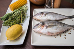 Fresh uncooked dorado. With lemon, herbs, oil and spices ready for preparing Stock Photos
