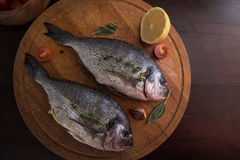 Fresh uncooked dorado. With lemon, herbs, oil and spices ready for preparing Stock Photography