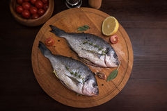 Fresh uncooked dorado. With lemon, herbs, oil and spices ready for preparing Royalty Free Stock Photos