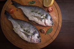 Fresh uncooked dorado. With lemon, herbs, oil and spices ready for preparing Royalty Free Stock Photo