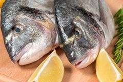 Fresh uncooked dorado or sea bream fish with lemon. And herbs on wooden board Royalty Free Stock Photography
