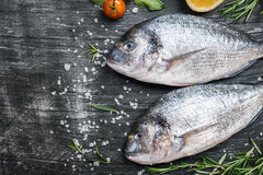 Fresh uncooked dorado. Or sea bream fish with lemon, herbs, olive oil and spices over black backdrop, top view with copy space Royalty Free Stock Photos