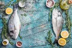 Fresh uncooked dorado. Or sea bream fish with lemon, herbs, olive oil and spices over blue background, top view with copy space Stock Images