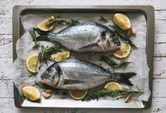Fresh uncooked Dorado or sea bream fish with lemon and rosemary. Lie on a metal baking tray on the white wooden background. Top view Royalty Free Stock Photo