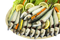 Fresh uncooked fish. Fresh fish from Aegean, Mediterranean sea Royalty Free Stock Photos