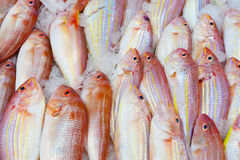 Fresh uncooked fish for sale Stock Photos