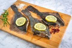 Fresh uncooked flounder fish royalty free stock photography