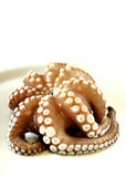 Fresh uncooked octopus in a plate. White background Stock Photography