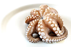 Fresh uncooked octopus in a plate. White background Royalty Free Stock Photos