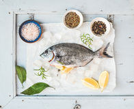 Fresh uncooked sea bream fish with lemon, herbs, ice and spices Stock Images